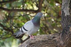 鸠在树` s冠坐 一只鸟在公园 库存照片