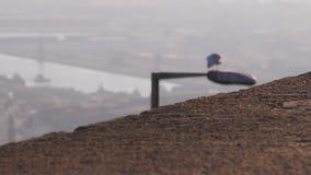鸠在沥青粗心大意地走 海鸥坐路灯柱鸟,自然,背景,环境,全球性 股票视频