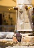 鸠坐一个喷泉在巴里,普利亚,意大利 免版税库存图片