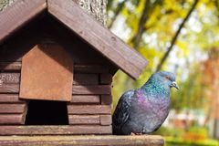 鸠坐一棵树的一个鸟房子在夏天森林里 免版税库存照片