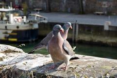 鸠夫妇在塞纳河,巴黎码头的  免版税库存照片