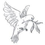 鸽子叼树枝表情符号分享展示