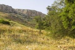 鸠的谷在阿尔贝尔自然保护的在以色列 免版税库存照片