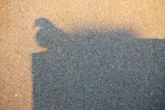鸠的阴影 库存图片