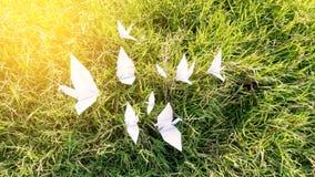 鸠鸟在草绿色背景的纸白色 库存图片