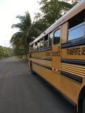 鸡公共汽车在哥斯达黎加,中美洲,加勒比海岸 库存图片