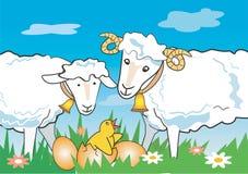 鸡公羊绵羊 库存例证