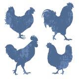 鸡剪影难看的东西 免版税图库摄影