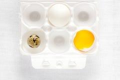 鸡和鹌鹑蛋在白色 库存图片