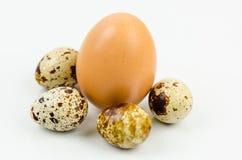 鸡和鹌鹑蛋 免版税库存照片