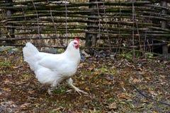 鸡在一个木房子的围场湖的 免版税库存图片