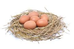 鸡在白色背景隔绝的干草巢怂恿 免版税库存照片