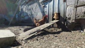 鸡在笔进来 国家鸡舍 股票视频