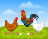 养鸡场场面 免版税图库摄影