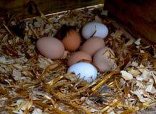 鸡场 免版税库存照片