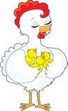 鸡小鸡 免版税图库摄影
