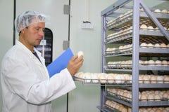 鸡控制蛋农夫 免版税库存图片