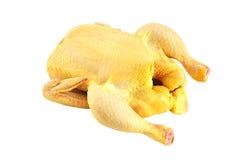鸡查出在原始的白色 免版税库存图片