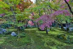 鸡爪枫树茂盛植物在秋天期间的在一个庭院里在京都,日本 库存照片