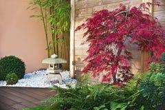 鸡爪枫红色结构树 免版税库存图片