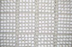 鸡白色鸡蛋  免版税库存图片