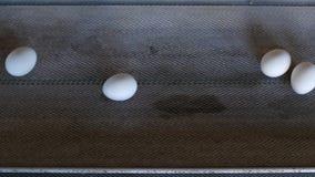 鸡的生产怂恿,禽畜,鸡蛋审阅进一步排序的传动机的鸡,特写镜头 股票视频