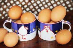 从鸡的鸡蛋 免版税图库摄影