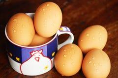 从鸡的鸡蛋 库存图片