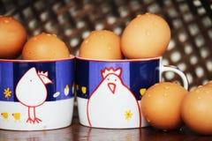 从鸡的鸡蛋 库存照片