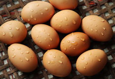 从鸡的鸡蛋 图库摄影