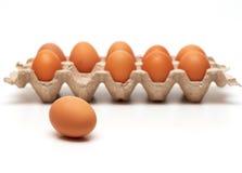 鸡蛋一 图库摄影