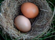 鸡蛋二 免版税库存照片