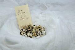 鸡蛋使白色套入 免版税图库摄影