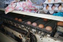 鸡蛋分类机器 免版税库存照片