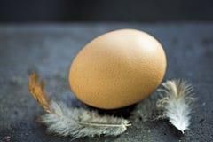 鸡蛋和两根羽毛 库存图片