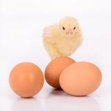 鸡蛋和鸡 免版税库存图片