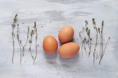 鸡蛋和麝香草在轻的背景 免版税库存照片