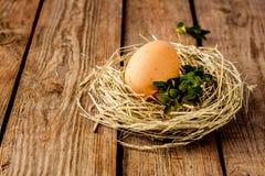 鸡蛋和黄杨属在干草在葡萄酒木头筑巢 免版税库存图片