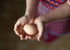 鸡蛋在手中 免版税图库摄影