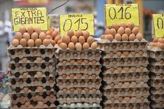 鸡蛋待售在基多,厄瓜多尔 免版税图库摄影