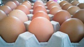 鸡蛋灰色盘子用许多鸡蛋 免版税库存图片