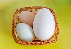 鸡蛋的汇集,大白色鹅蛋,浅绿色的鸭子鸡蛋, 免版税库存图片