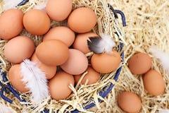 鸡蛋种田新鲜有机 免版税库存照片