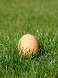 鸡蛋被放置的新 免版税图库摄影