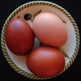 鸡蛋静物画照片 库存照片