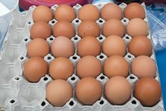 鸡蛋,行鸡蛋的关闭 库存照片