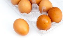 鸡蛋 免版税图库摄影