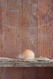 鸡蛋 免版税库存照片