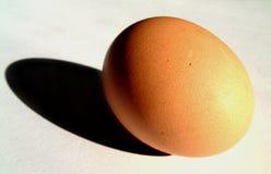 鸡蛋11 免版税库存图片