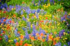 鸡血石的里奇野花。 免版税库存图片